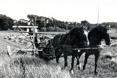 2 Kornhøst med selvbinder