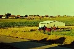 8 Kornhøst i Kirkevad 1965