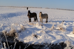 12-Vinter-2010