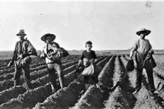 1-Kartoflerne-sættes-tidlig-i-foråret