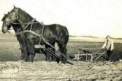 1-2-heste.-En-een-fuget-plov-og-een-mand-bag-tømmerne-1952