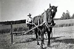 14-Høst-rive-med-hest-foran-1950