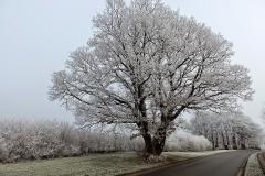 Vinterstemningsbilleder fra Vikingestien 2011 (14)