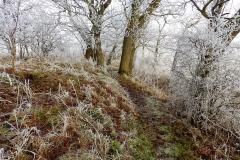 Vinterstemningsbilleder fra Vikingestien 2011 (7)