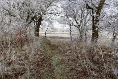 Vinterstemningsbilleder fra Vikingestien 2011 (9)